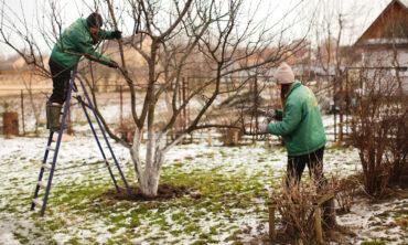 Pflanzen Kölle Live – Fit für den Winter